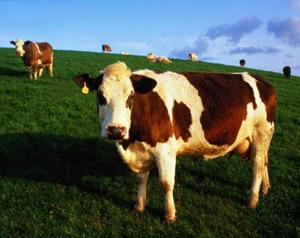 معلومات عن موسوعة الحيوان 1098613057