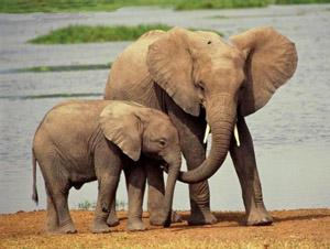 1098613801 أروع صور الفيل    Finest images of the elephant