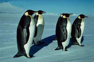 معلومات عن موسوعة الحيوان 1098615105