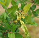 امراض وافات النباتات 1101818400