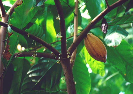http://s3.kenanaonline.com/photos/1163331681.jpg