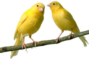 منتدى الطائر الذهبي